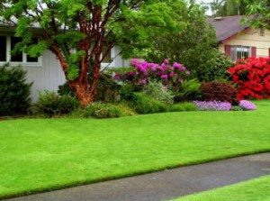 Lawn Care Bethany CT