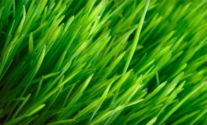 Lawn Care Watertown CT