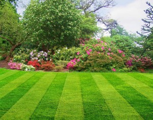 Lawn Care Woodbridge CT