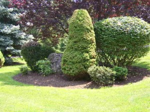 Larger trimmed bushes